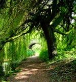 grön bana Royaltyfri Fotografi