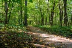 grön bana för skog Fotografering för Bildbyråer