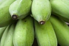Grön banan Royaltyfri Fotografi