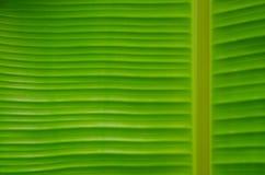 Grön bananbladbakgrund Royaltyfri Bild