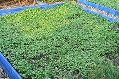 Grön befruktning i blomsterrabatt arkivbild