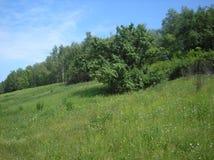 Grön bergig glänta för sommar arkivbilder