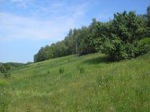 Grön bergig glänta för sommar fotografering för bildbyråer