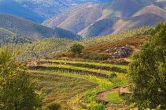 Grön berglantgård Arkivbild