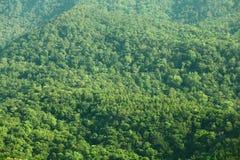 grön bergsikt för skog Royaltyfria Foton