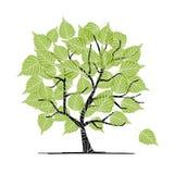 Grön björktree för din design Royaltyfria Bilder
