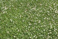 Grön blad- och blommabakgrund Royaltyfri Bild