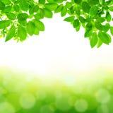 Grön bladabstrakt begreppbakgrund Royaltyfria Bilder