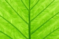 Grön bladbakgrund Arkivfoton