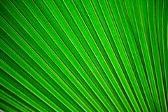 Grön bladbakgrund Royaltyfri Bild