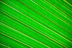 Grön bladbakgrund Arkivfoto
