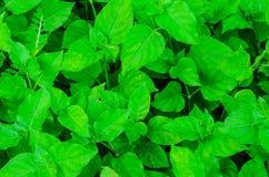 Grön bladbakgrund Royaltyfria Foton