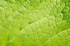 Grön bladbakgrund Arkivbild