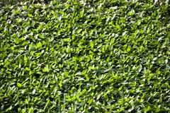 Grön bladbakgrund Royaltyfri Foto