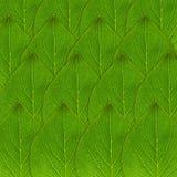Grön bladbakgrund Fotografering för Bildbyråer