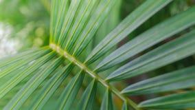 Grön bladbakgrund för kokosnöt Palmblad arkivfoto
