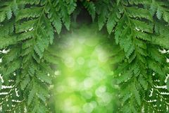 Grön bladbakgrund för symmetri med bokeh på mitten Royaltyfri Fotografi