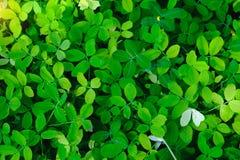 Grön bladbakgrund i natur med mjuk belysning för sol Arkivbild