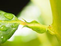 Grön bladbakgrund med regndroppar Royaltyfri Fotografi