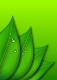 Grön bladbakgrund med vattendroppar Arkivfoto