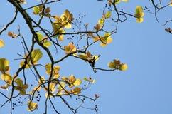 GRÖN BLADBAKGRUND och blå himmel Royaltyfria Bilder