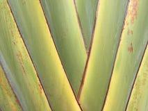 Grön bladbanantextur Arkivbilder