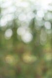 Grön bladbokeh som bakgrundstextur Royaltyfri Foto
