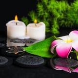 Grön bladcallalilja, plumeria med droppar och stearinljus på zenst Fotografering för Bildbyråer