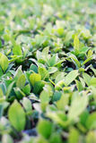 Grön bladcloseup i moringen Arkivbild