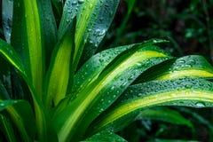 Grön bladdroppe av vatten Fotografering för Bildbyråer