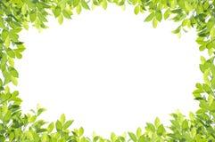 Grön bladgräns på vit bakgrund Royaltyfri Bild
