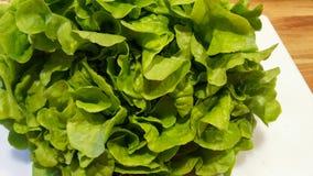 Grön bladgrönsallat som är klar för sallad Arkivfoto