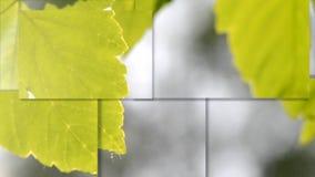 Grön bladnärbild på en suddig grå bakgrund med sol- belysning lager videofilmer