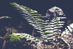 Grön bladormbunke, abstrakt naturlig bakgrund och textur i mörker arkivbilder