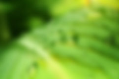 Grön bladsuddighet Arkivfoto