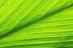 Grön bladtextur Royaltyfria Foton