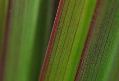 Grön bladtextur Arkivfoto