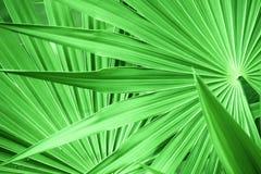 Grön bladtextur Arkivfoton