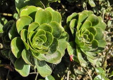 Grön blomma Arkivbild