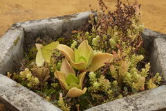 Grön blomma royaltyfri fotografi