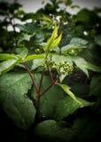 Grön blomma Royaltyfria Bilder
