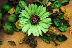 Grön blomma Fotografering för Bildbyråer