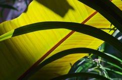 Grön blomma Arkivbilder