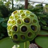 Grön blomma arkivfoton
