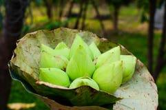 Grön blomma för vit lotusblomma Arkivfoton