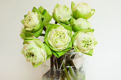 Grön blomma för vit lotusblomma Royaltyfri Fotografi