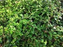 Grön blommabladbakgrund Arkivfoto
