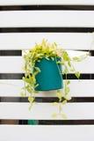 Grön blommakruka Fotografering för Bildbyråer