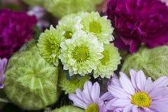 Grön blommanärbild Arkivfoto