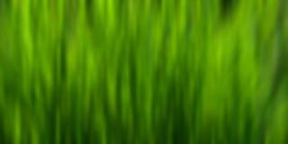 Grön blurbakgrund Arkivfoto